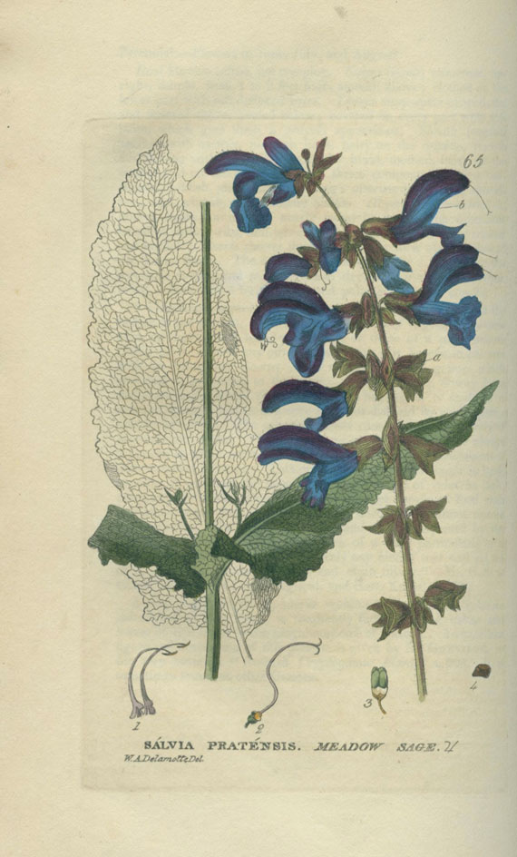 William Baxter - British Flowering Plants. 6 Bde. 1834-43