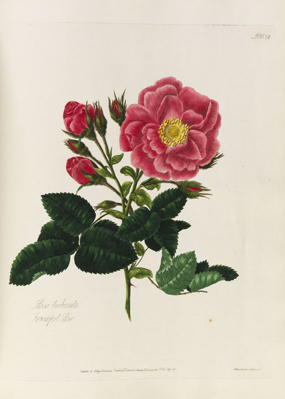 Mary Lawrance - A collection of roses. 1799. -