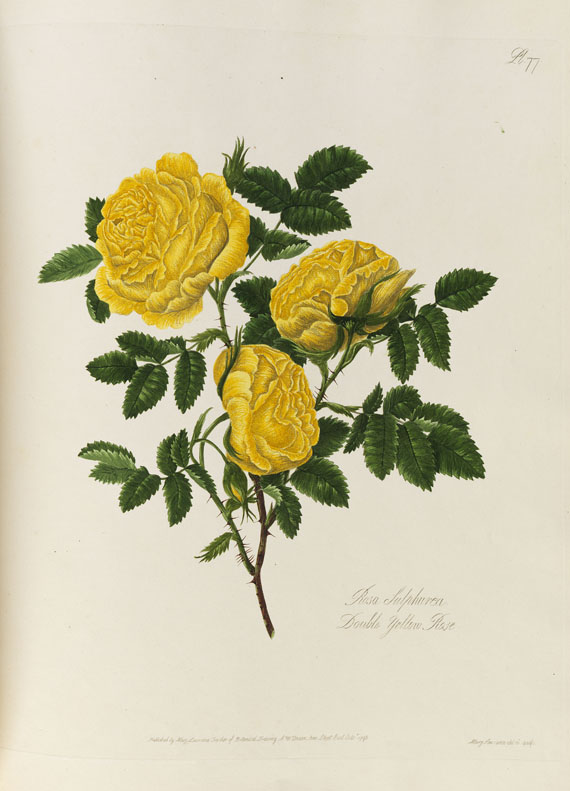 Mary Lawrance - A collection of roses. 1799.