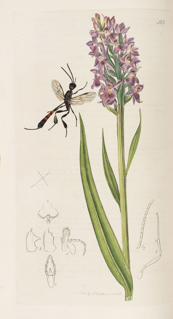 John Curtis - The genera of insects. 8 Bde. 1823-40 -
