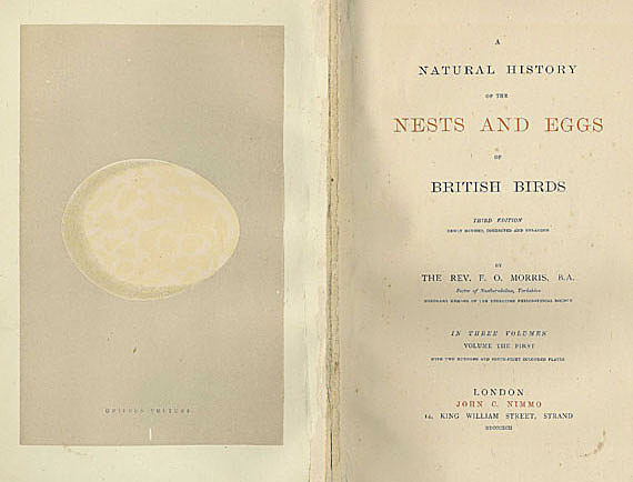 William Chapman Hewitson - Nests and eggs of British birds. 3 Bde. Dabei: Eggs of British Birds. 2 Bde. + Mudie, Feathered Tribes. 2 Bde. + History of British Birds. 8 Bde.