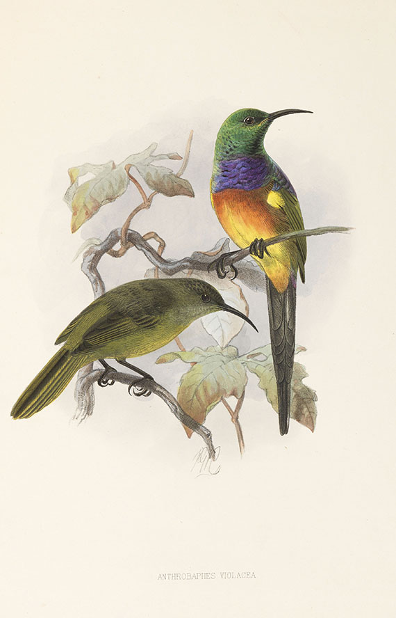 George Ernest Shelley - A monograph of the Nectariniidae, or sun birds. 1876. -