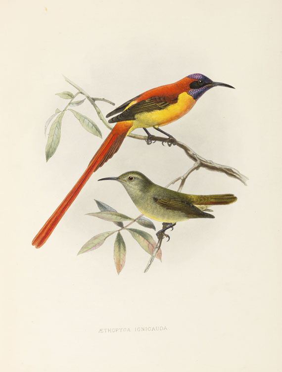 George Ernest Shelley - A monograph of the Nectariniidae, or sun birds