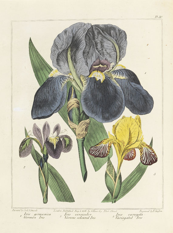 Sydenham Edwards - New Flora Britannica